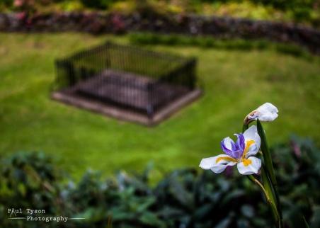 Napoleons Tomb Cape Iris