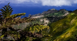 High Peak Tree Ferns