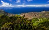 Sandy Bay Tree Ferns