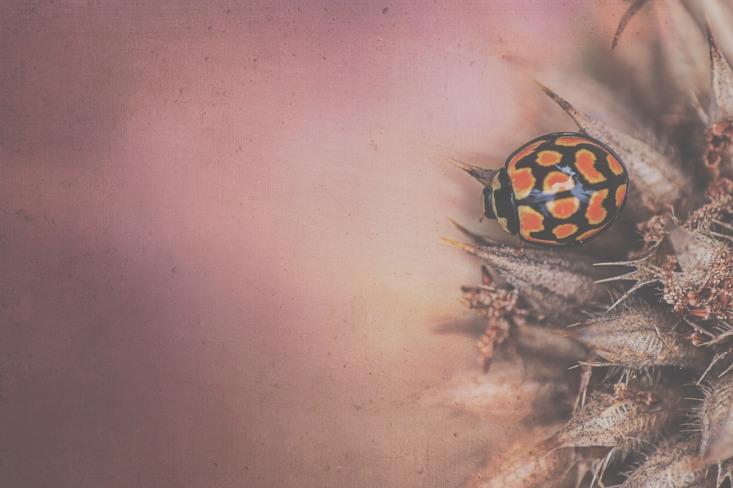 Ladybird Texture Low Contrast
