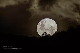 Moon Rise